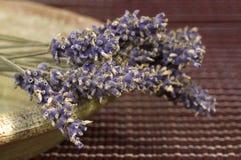 Droge lavendelbos stock afbeeldingen
