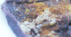 Droge moederkoek op gaas stock videobeelden