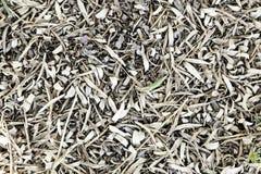 Droge olijfbladeren stock fotografie