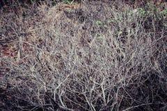 Droge oude boomtakken, uitstekende textuur als achtergrond Stock Foto's