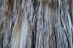Droge palm Royalty-vrije Stock Foto's