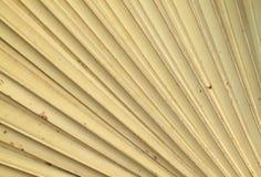 Droge palmbladentextuur Stock Afbeelding