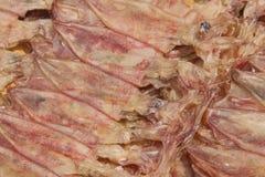 Droge pijlinktvis bij zeevruchtenmarkt. royalty-vrije stock afbeeldingen