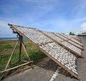 Droge pijlinktvis dichtbij het visserijdorp Thailand Stock Afbeelding
