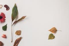 Droge plats en twee de herfstbladeren van recht Royalty-vrije Stock Afbeeldingen