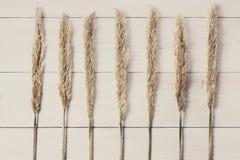 Droge pluizige de textuurachtergrond van de cattailbloem op wit hout Stock Fotografie