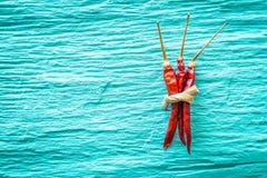 Droge rode Spaanse pepers Stock Afbeeldingen