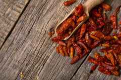 Droge Rode Spaanse pepers Stock Afbeelding