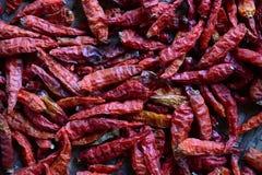 Droge rode Spaanse pepers die op een houten rek drogen Royalty-vrije Stock Foto's