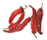 Droge roodgloeiende Spaanse peperpeper Royalty-vrije Stock Foto's