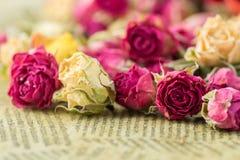 Droge roze en roomrozen Royalty-vrije Stock Fotografie