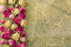 Droge roze en roomrozen Stock Foto
