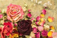 Droge roze en roomrozen Royalty-vrije Stock Foto