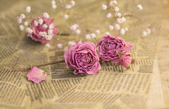 Droge roze rozen Stock Fotografie