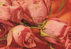 Droge rozen Royalty-vrije Stock Foto