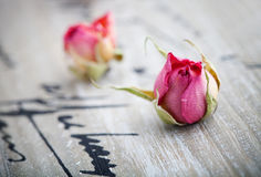 Droge rozen royalty-vrije stock fotografie