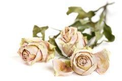 Droge rozen op een witte oppervlakte stock foto