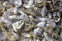 Droge ruwe ronde vissen Stock Foto