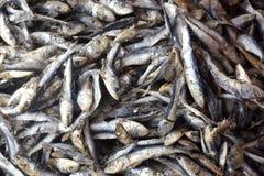 Droge ruwe vissen Royalty-vrije Stock Afbeeldingen