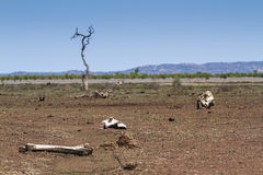 Droge savanne, in het Nationale park van Kruger, Zuid-Afrika Royalty-vrije Stock Foto's