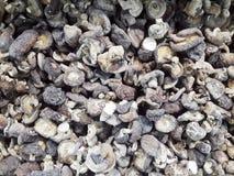 Droge shiitakepaddestoelen royalty-vrije stock foto's