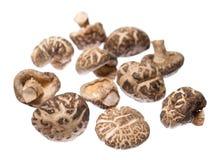 Droge shiitakepaddestoelen Stock Foto