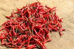 Droge Spaanse peper op jutezak Stock Fotografie