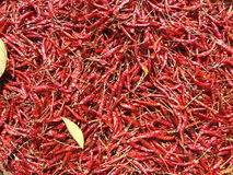 Droge Spaanse peperpeper, Bangkok, Thailand. Stock Afbeeldingen