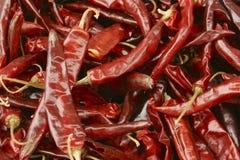 Droge Spaanse pepers Royalty-vrije Stock Afbeeldingen
