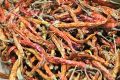 Droge Spaanse pepers Stock Foto