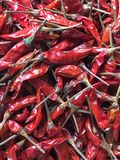 Droge Spaanse pepers of rode chillis Stock Foto