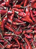 Droge Spaanse pepers of rode chillis Royalty-vrije Stock Foto