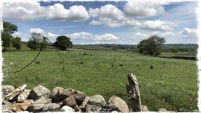Droge steenmuur Wensleydale Yorkshire Royalty-vrije Stock Fotografie