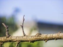Droge stok - hout Stock Foto's