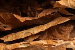 Droge tabaksbladeren als achtergrond Royalty-vrije Stock Foto's