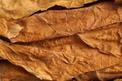 Droge tabaksbladeren als achtergrond Stock Afbeeldingen