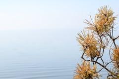 Droge tak van spar en kegel op blauwe hemel en water dichte omhooggaand als achtergrond De achtergrond van de aard stock foto's