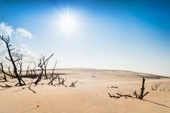 Droge takken op woestijn Stock Afbeelding