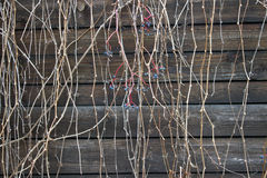 Droge takken over oud hout Royalty-vrije Stock Fotografie