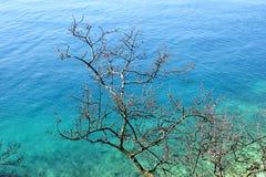 Droge takkenboom en overzees in de achtergrond/het Mooie natuurlijke van de milieubehang/Toerist seizoen, reis, vakantieconcept Stock Foto