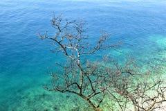 Droge takkenboom en overzees in de achtergrond/het Mooie natuurlijke van de milieubehang/Toerist seizoen, reis, vakantieconcept Royalty-vrije Stock Foto's