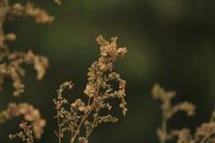 Droge vegetatie Royalty-vrije Stock Afbeeldingen