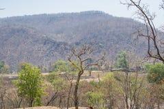 Droge Vergankelijk Bos en Vindhyanchal-Heuvels stock fotografie