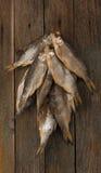 Droge Vissen Stock Afbeeldingen