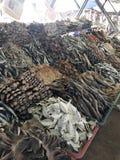 Droge vissen in de markt Sri Lanka Stock Afbeeldingen