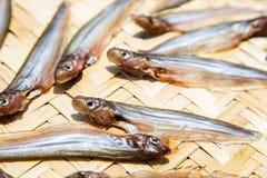 Droge vissen die in de zon op bamboeraad drogen, Thais Voedsel royalty-vrije stock foto