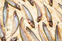Droge vissen die in de zon op bamboeraad drogen, Thais Voedsel royalty-vrije stock afbeeldingen