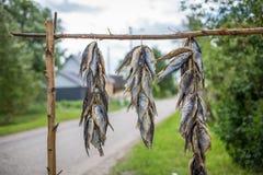 Droge vissen die op de kant van de weg in Oostelijk Estland hangen Stock Foto