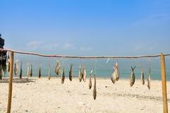 Droge vissen die op het strand moeten worden verkocht Royalty-vrije Stock Foto's