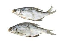 Droge vissen op een witte achtergrond Stock Fotografie